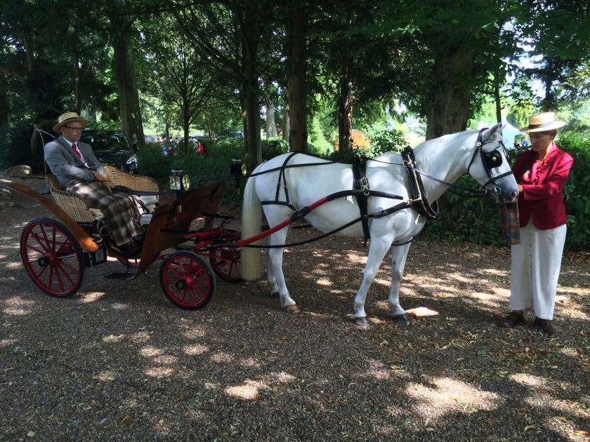 polishing poney
