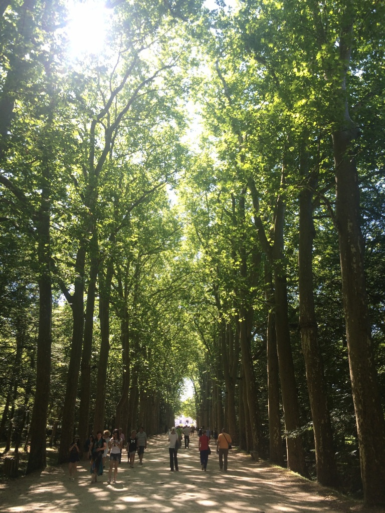The tree-lined pathway leading up to the Château Chenonceau.