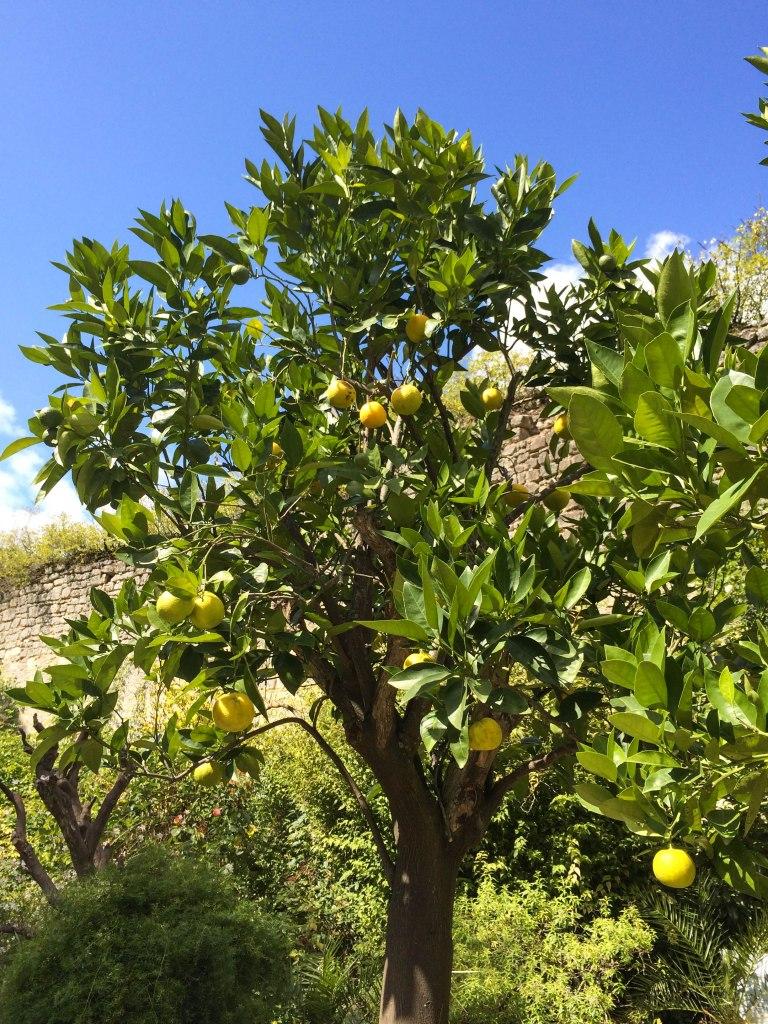 Love the lemon tree against the vibrant blue skies.