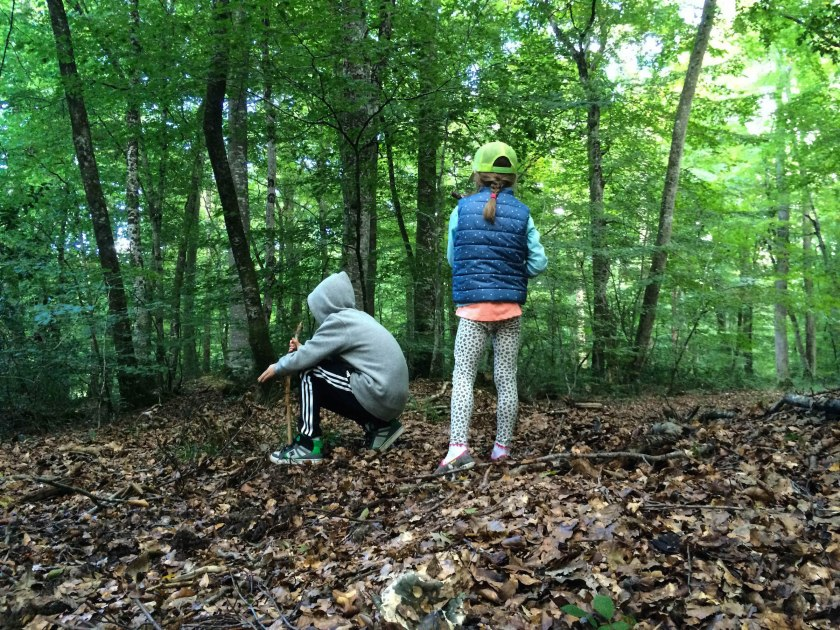 The forest floor was covered in leaves and teeming with life. Notably, we found large shiny beetles all over, and many huge reddish-brown slugs, quite different from the banana slugs we're used to. The kids loved it.