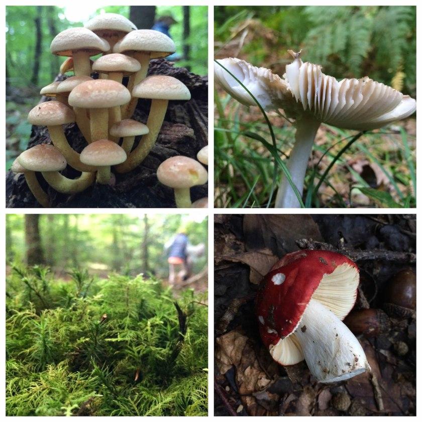 Forest floor findings.