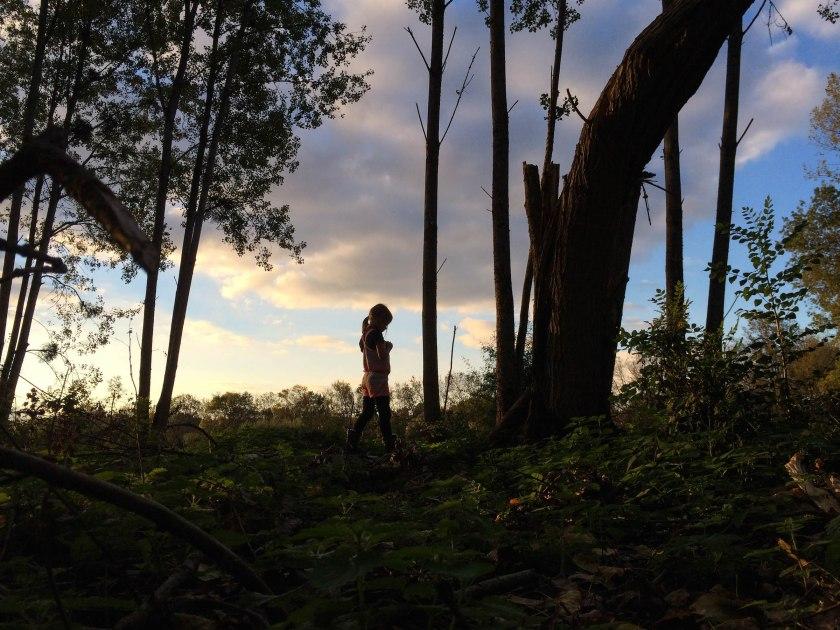 dani forest