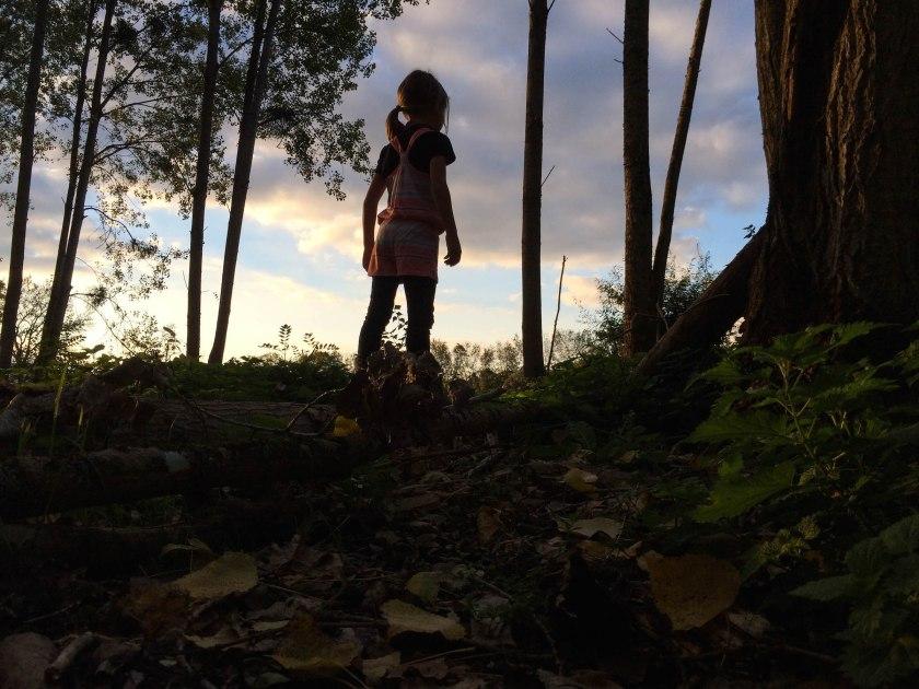 dani forest levitating