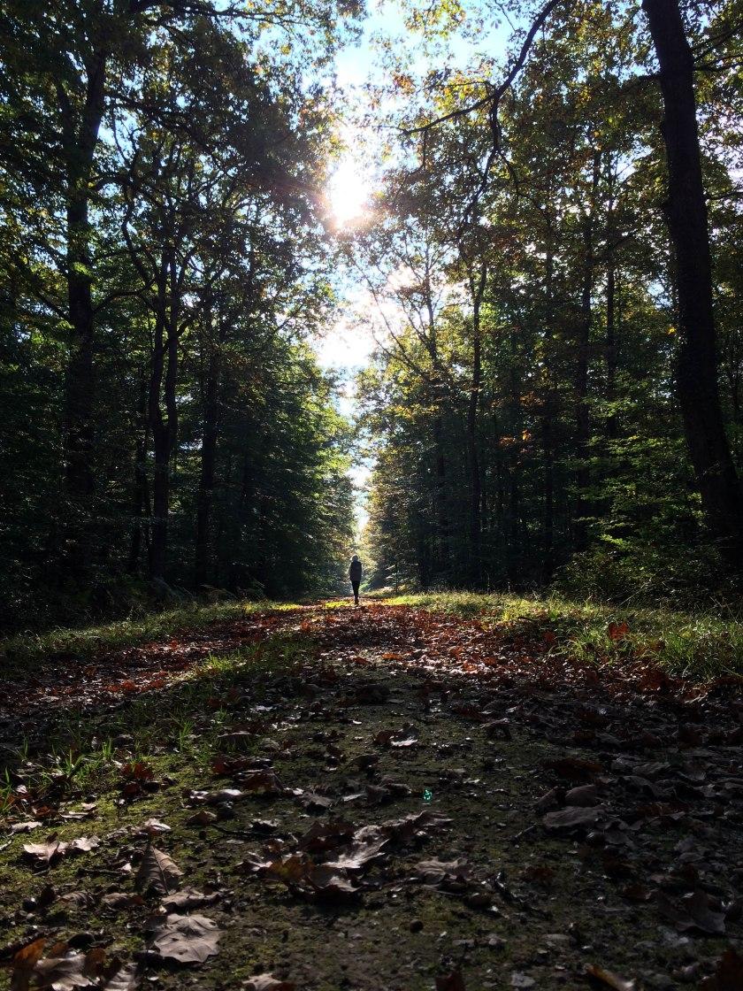 forest dani