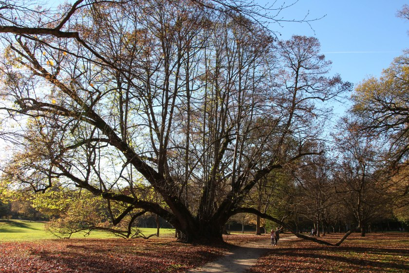 another remarkable tree