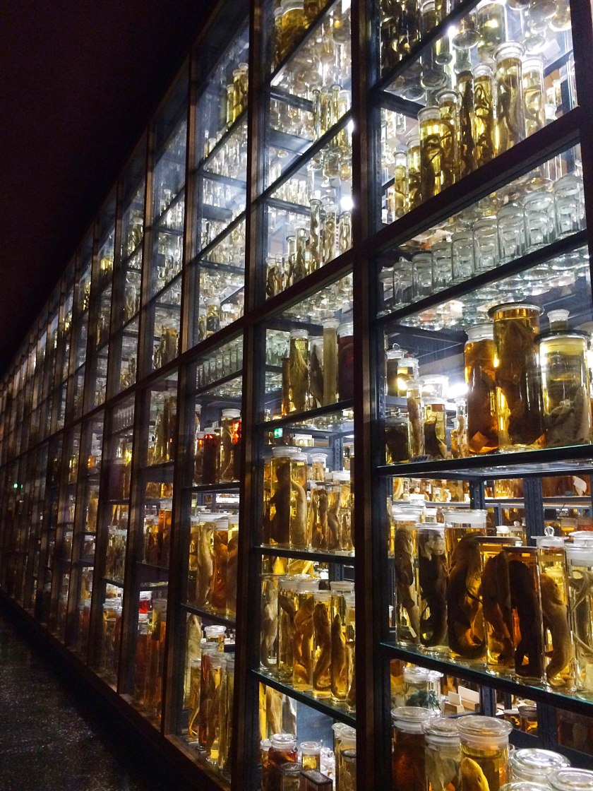 jars of specimens in museum
