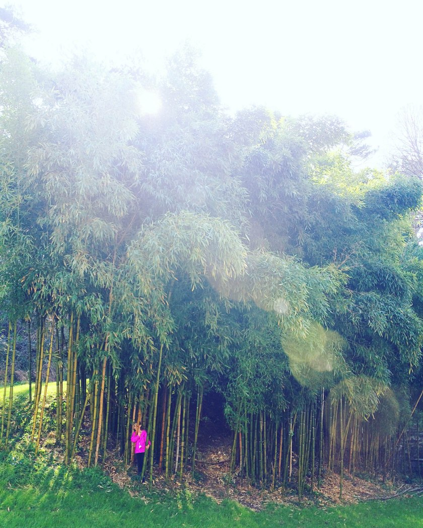 bamboo chateau d'usse