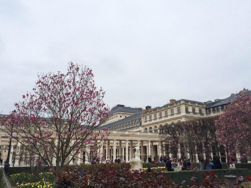 jardin du palais royale magnolias