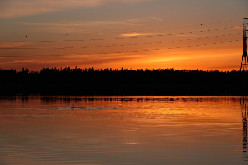sunset orange bird
