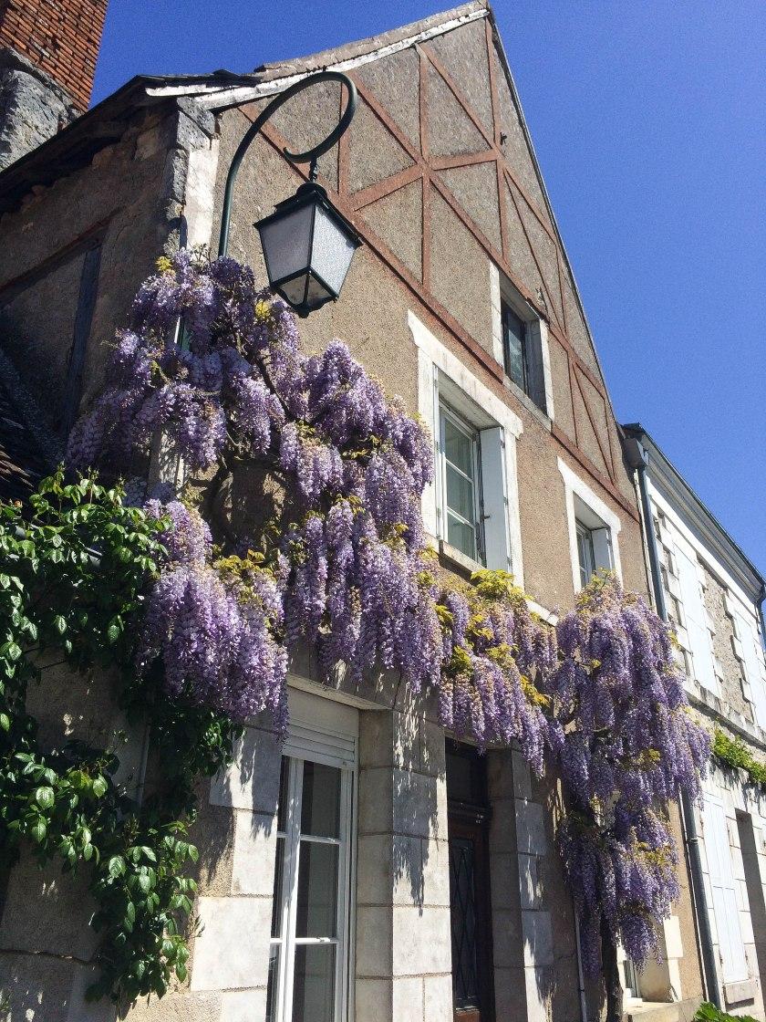 chedigny wisteria
