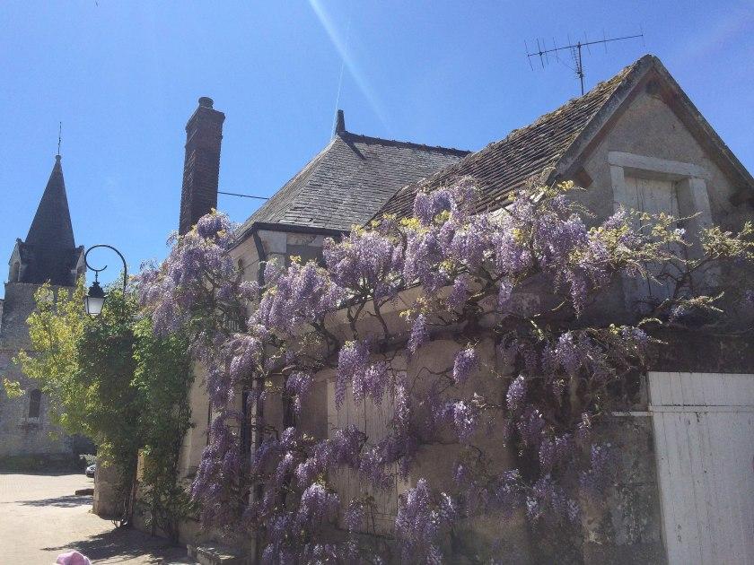 wisteria chedigny