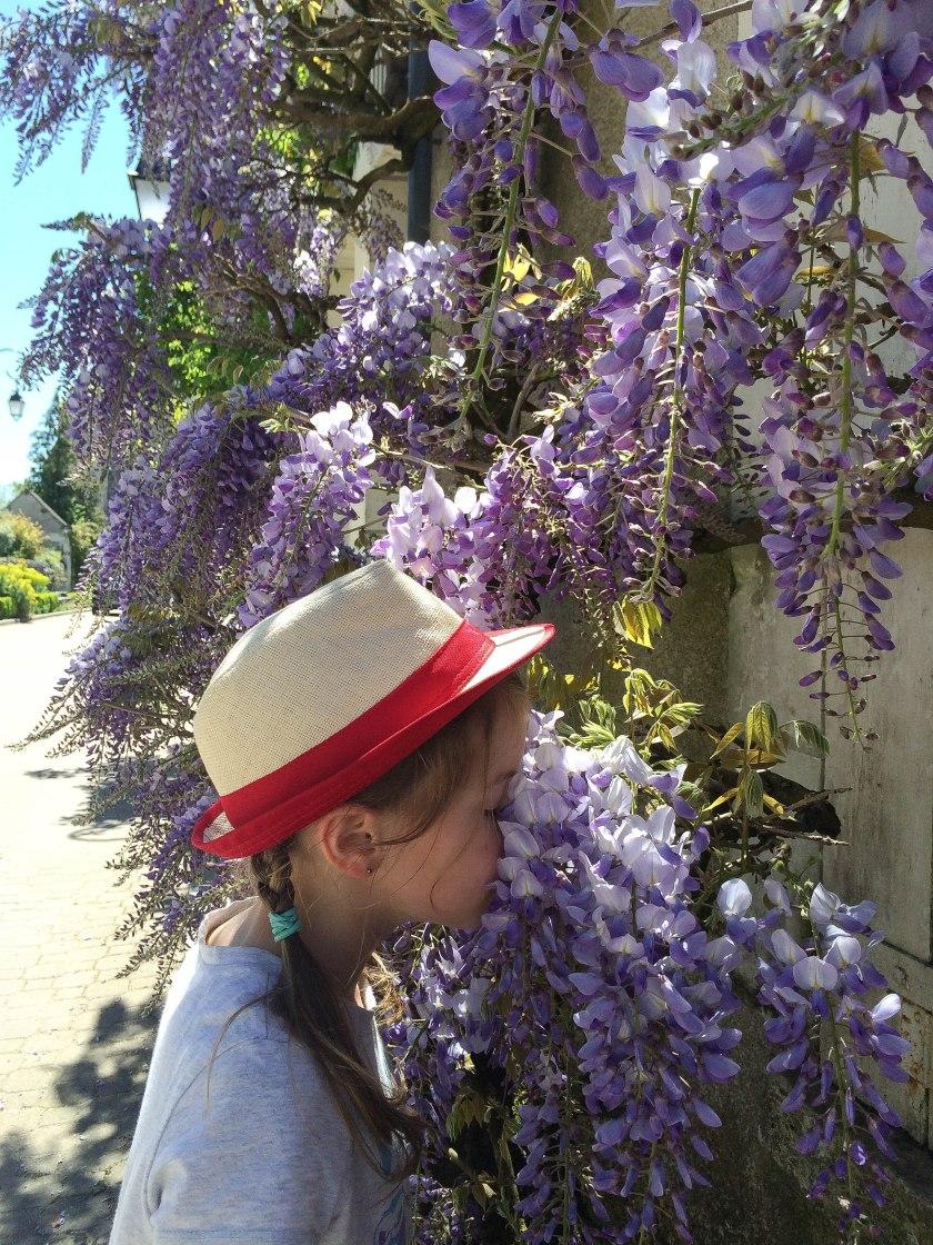 dani wisteria