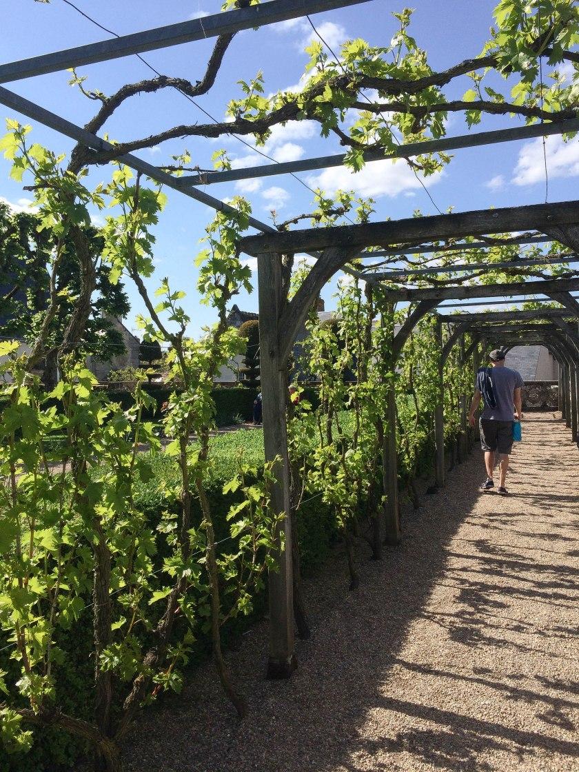 vine pathway