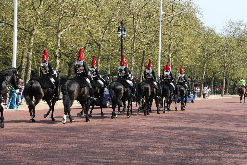 horses going