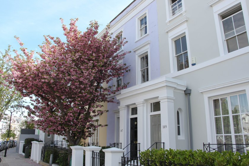 notting hill with cherry trees